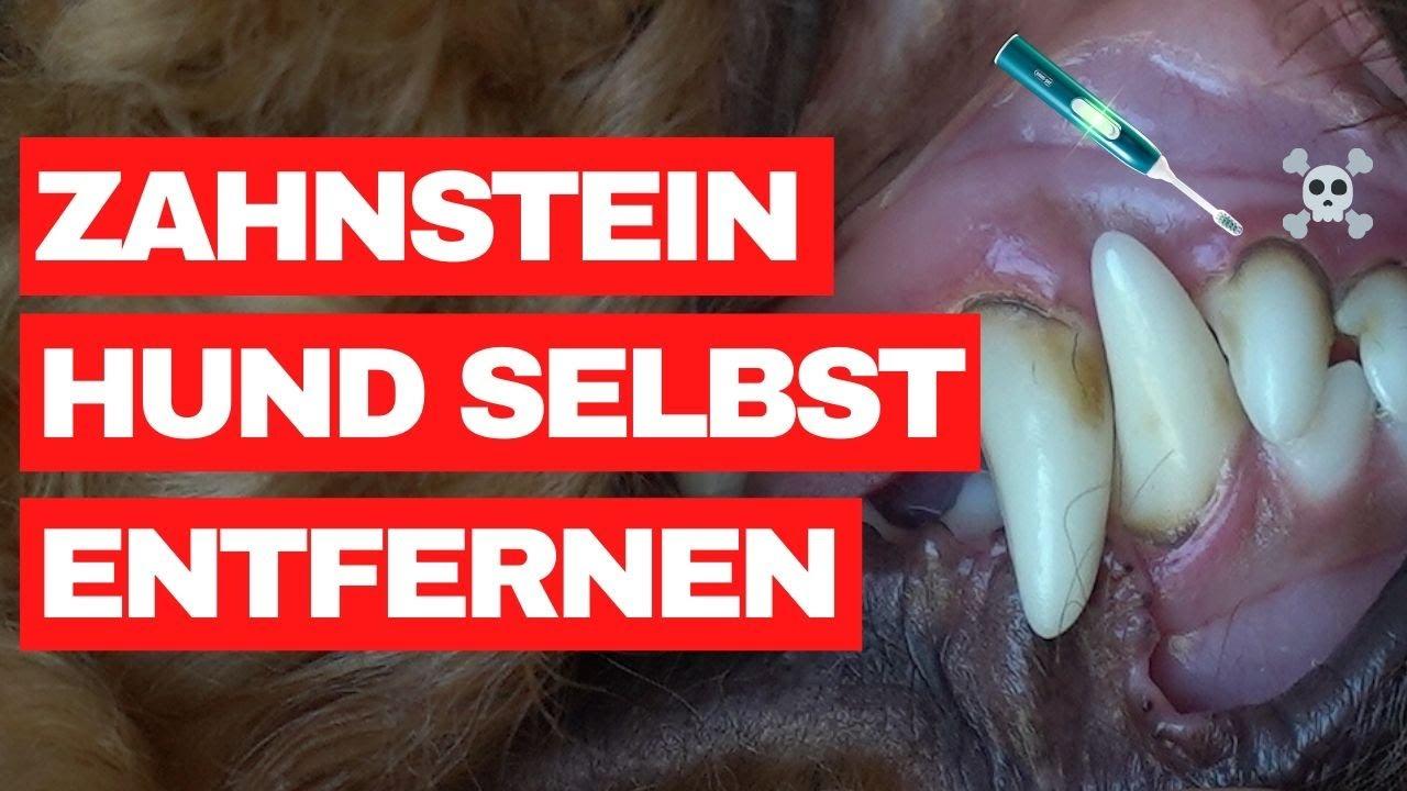 Zahnstein beim Hund selbst entfernen - Unsere Erfahrungen
