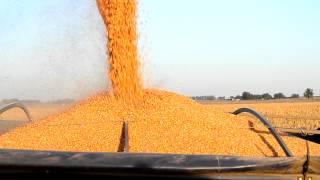 cosecha de maiz . case extreme
