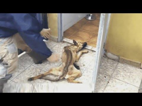 Выходя из помещения он просто погладил пса… через секунду мужчина бросился за помощью
