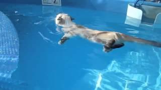 кошка плавает в бассейне