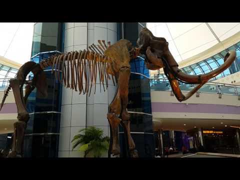 Woolly Mammoth Skeleton of Marina Mall in Abu Dhabi 04.04.2017