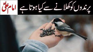 Prindon ko Anaj Khilana | Imam Ali as | Birds feeding | Mehrban Ali | Mehrban TV