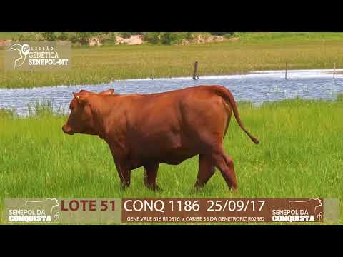 LOTE 51 CONQ 1186