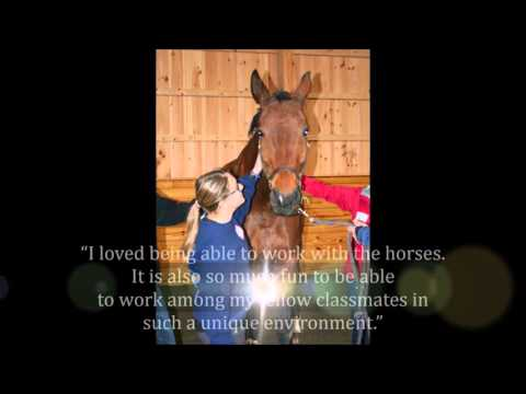 Raven Hill Farms – Full-service equine facility on 36