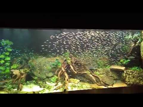 Fish Schooling In Nature Aquarium