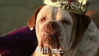Ужасная правда про породистых собак!