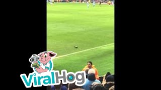 Manchester City Fans Chant at a Pigeon
