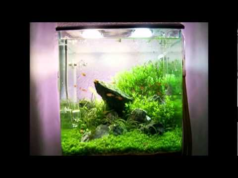30l nano cube dennerle planted youtube. Black Bedroom Furniture Sets. Home Design Ideas