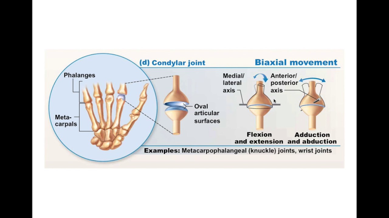 All About Joint Definition Anatomy Movement Amp Types Kidskunstfo