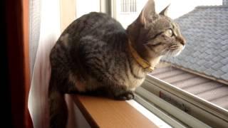 カラスを威嚇する猫②