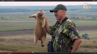 Охота на сурка-байбака.