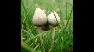 Health Benefits Of Magic Mushrooms