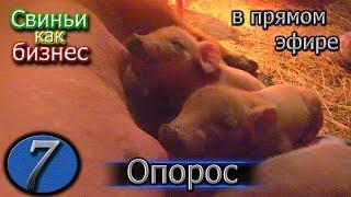 """видео: ОПОРОС В """"ПРЯМОМ ЭФИРЕ"""""""