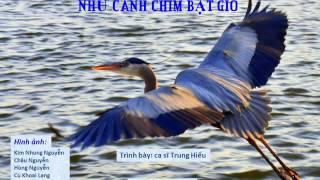 Nhạc mới - Như Cánh Chim Bạt Gió