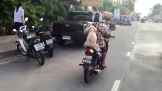 Dog riding a motorcycle