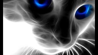 """СП""""В мире животных""""(3) """"Кошачий взгляд"""" или кот из дыма/1 отчёт/ - алмазная мозаика"""