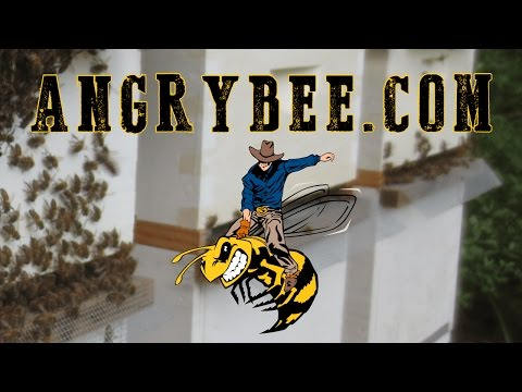 Honey Bees Live Stream by Texas Angry Bee Honey