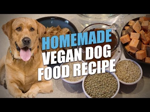 Homemade Vegan Dog Food Recipe (the Healthiest Option)
