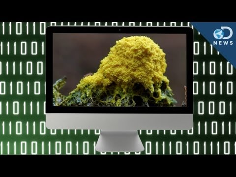 Living Computer Created With Slime Mold?