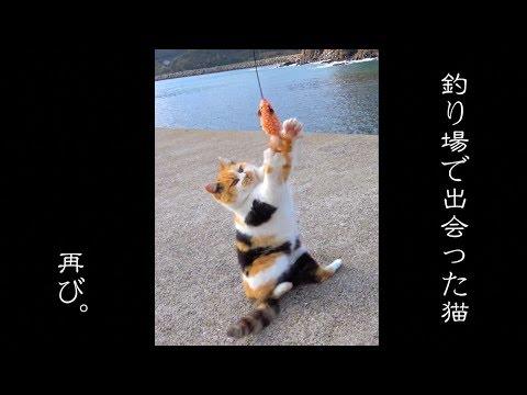 100万�生���猫�今・・・