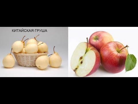 Как вырастить китайскую грушу и яблоки из семян