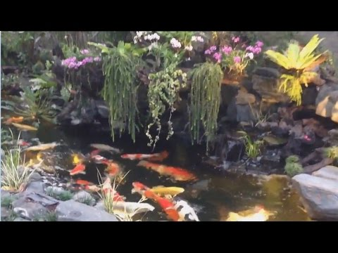 Best koi pond design no1 youtube for Koi carp pond design