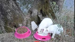 ☺ Как живут бездомные кошки в Греции. Остров Корфу(http://www.plastikkarta.ru/?utm_source=social&utm_medium=youtube&utm_campaign=614716 Рекламные, дисконтные, топливные, бесконтактные ..., 2015-11-14T15:28:55.000Z)