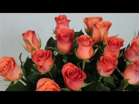 Коралловые розы - заказать можно на Flowers.ua!