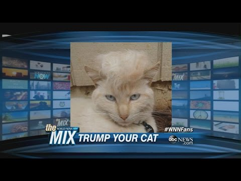 #TrumpYourCat Is The Internet's New Favorite Meme