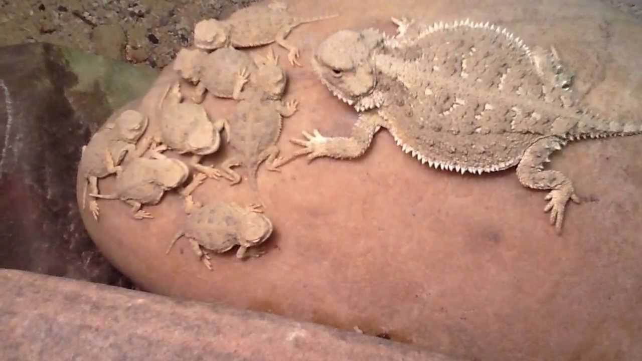 softshell turtle tank