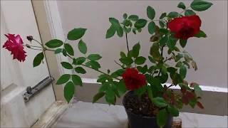 magic of epsum salt MgSO4 in plants