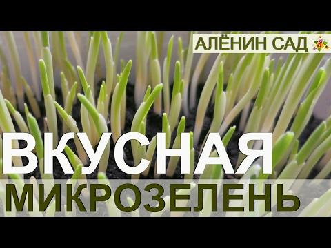 Выращивание микро-зелени -