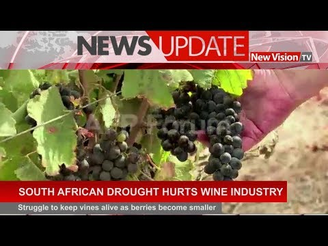 South African drought hurts wine industry