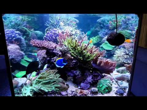 My Reeftank And Butterfly Reef