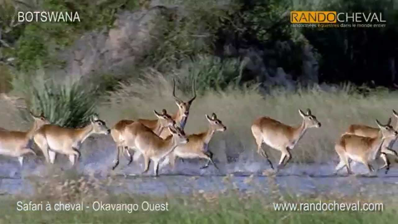 SAFARI A CHEVAL - Comentario choisir votre voyage - questre en Afrique (Afrique du Sud, Botswana