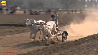 DHATT (Hoshiarpur) !! BULLOCK CART RACES - 2016 || Full HD ||