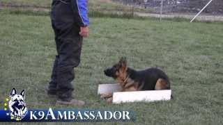 Puppy Obedience Training - Justice Atok - 5 Months Old German Shepherd Dog / K9 Ambassador
