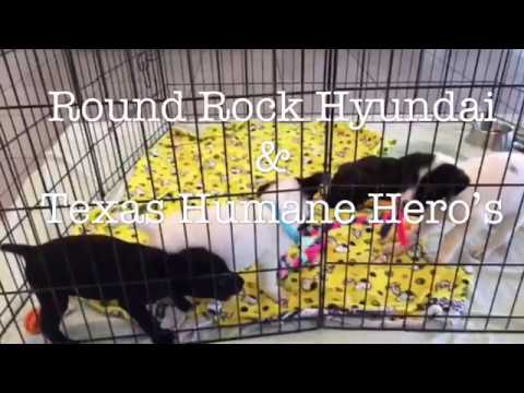 The People, Puppies, And Cars: Ty Grant Of Round Rock Hyundai.   Duration:  87 Seconds.