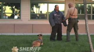 Police K9 Competition, Sonoma County Sheriff video