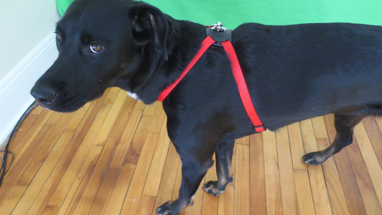 Size Right Adjustable Dog Harness Review Great 10