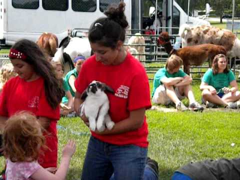 Call 815-600-6464 Mobile, Traveling Petting Zoo Chicago, Chicagoland, Illinois, Animal Rentals