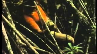 1987年CM タケダ アリナミンA マングローブの密林 村上弘明 村上弘明シリーズ 第一弾 「自然は 馬鹿力 がある。」