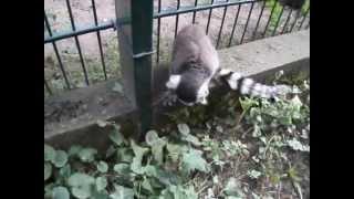 Ein Tag in Zoo Braunschweig Arche Noah  im Sommer 2013