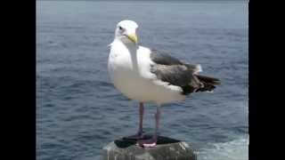 RELAX OR STUDY WITH NATURE SOUNDS: Waves and Gulls / 1 hour