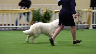 2017 Royal Adelaide Show Dog Arena   Day 9
