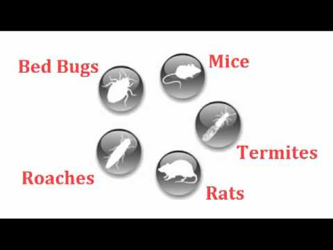 bed bug exterminator los angeles 213-928-7849, pest control Van Nuys, NorthRidge,