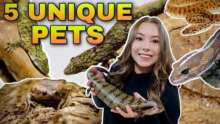 5 Unique Reptiles For BEGINNER…