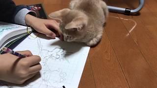息子の邪魔をする子猫がかわいい  The kitten get in the way thumbnail
