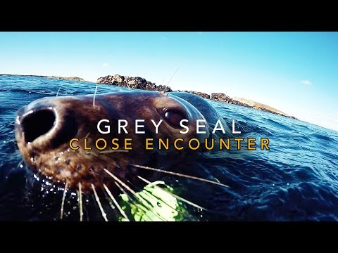 Seal Close Encounter: The Isles of Scilly