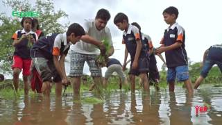 Rice Cultivation Youtube